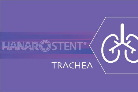 Trachea / Bronchium