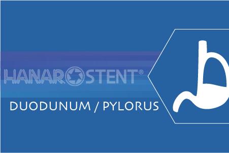 Duodenum / Pylorus